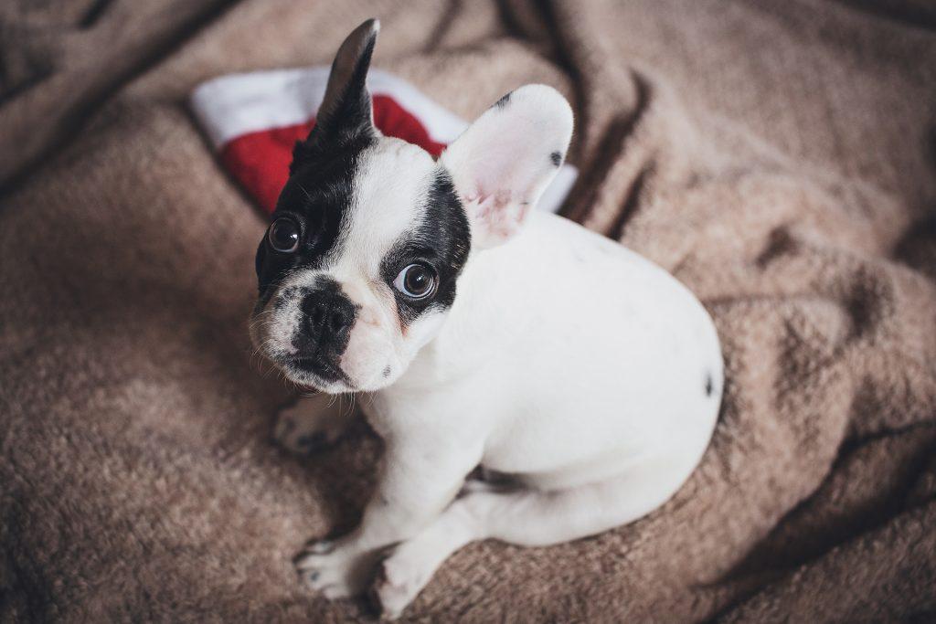 puppy 1 1024x683 - Jakich prezentów nie kupować na gwiazdkę