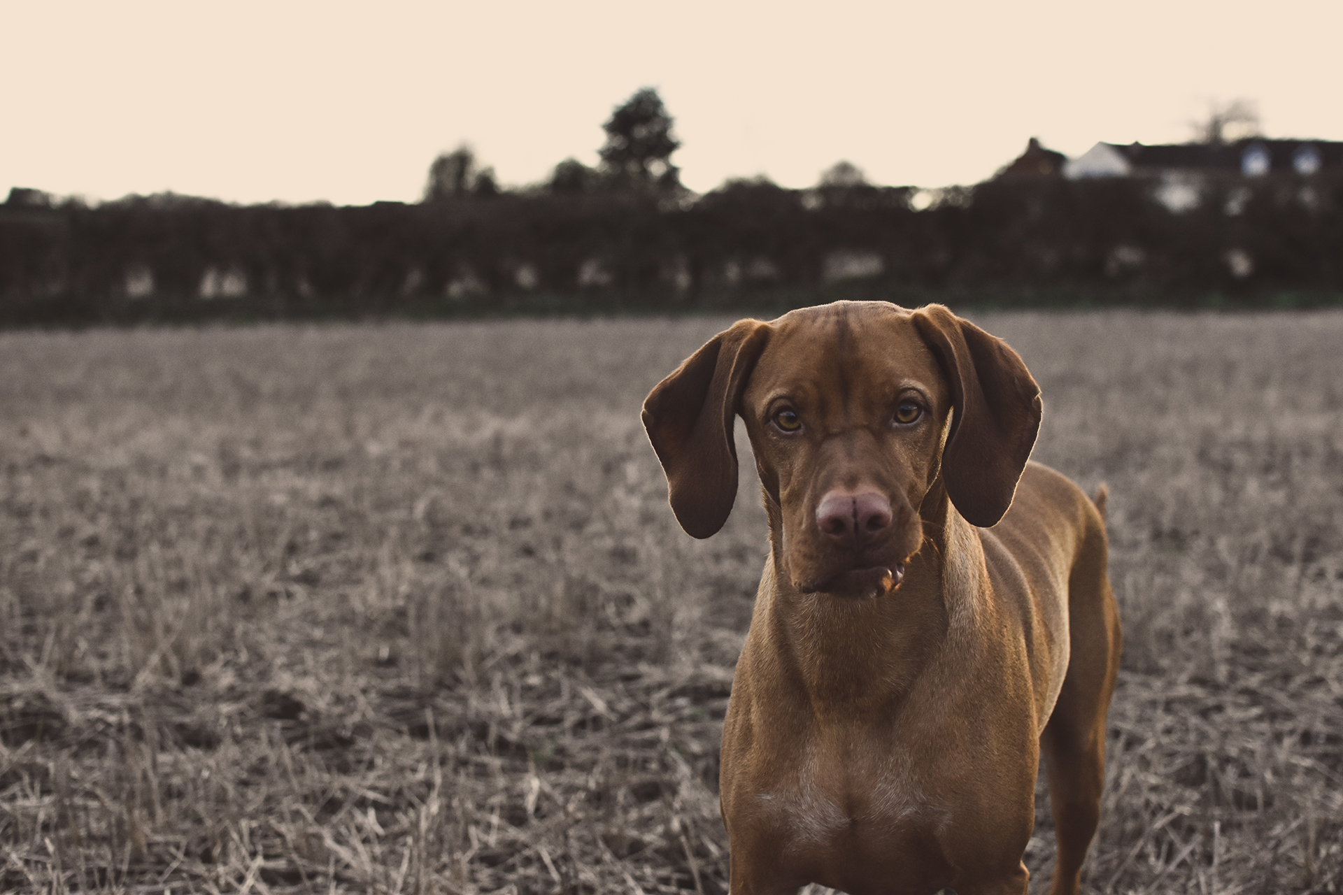 download dog - Człowieku, pilnuj psa