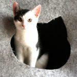 twitty 150x150 - Chcę być jak mój kot