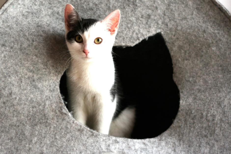 twitty 940x627 - Chcę być jak mój kot