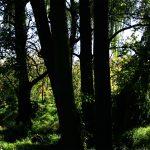 forest1 150x150 - Kiedy czujesz, że żyjesz