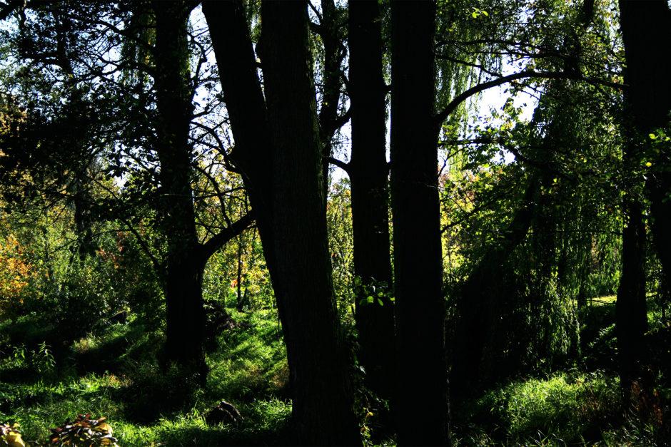 forest1 940x627 - Kiedy czujesz, że żyjesz