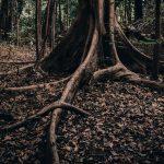 forest 150x150 - Rzecz o płonących lasach i poczuciu winy