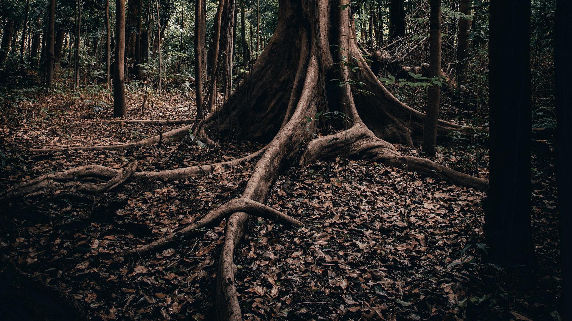 forest - Rzecz o płonących lasach i poczuciu winy