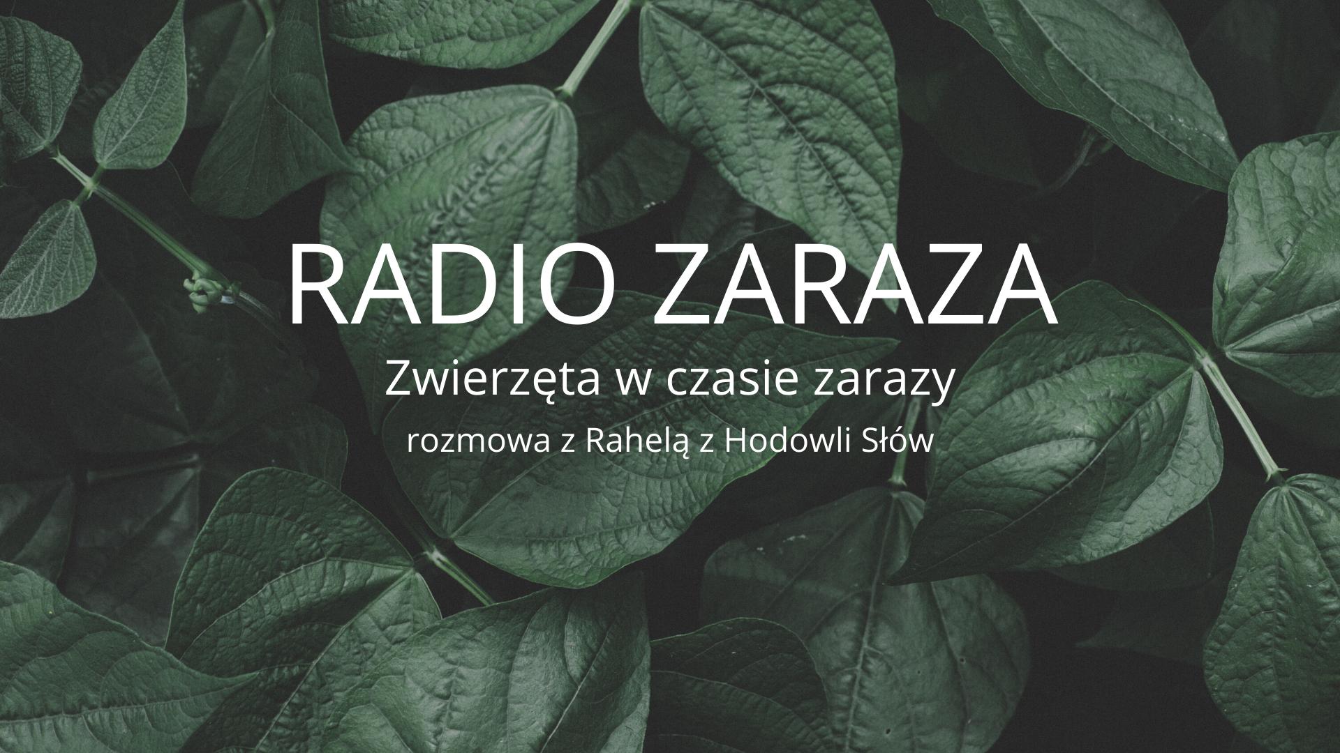 RADIO ZARAZA - Zwierzęta w czasie zarazy. Czyli wtem, jest podcast!