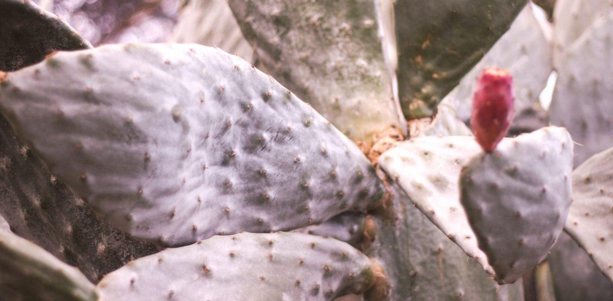 cactus 1 1220x600 - Rok w domu. Myśli na rocznicę pandemii