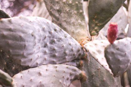 cactus 1 420x280 - Rok w domu. Myśli na rocznicę pandemii
