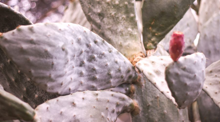 cactus 1 900x500 - Rok w domu. Myśli na rocznicę pandemii