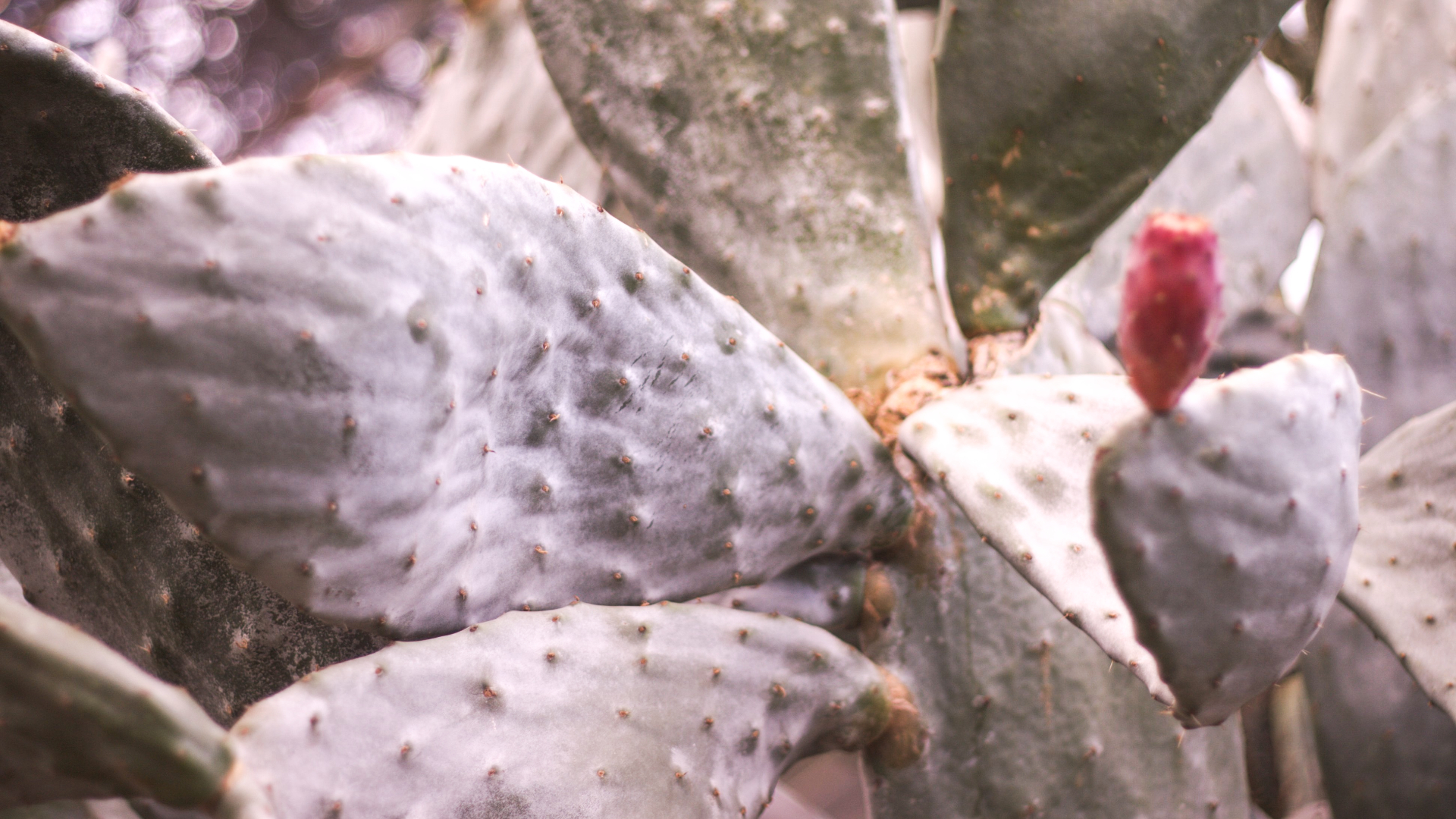 cactus 1 - Rok w domu. Myśli na rocznicę pandemii